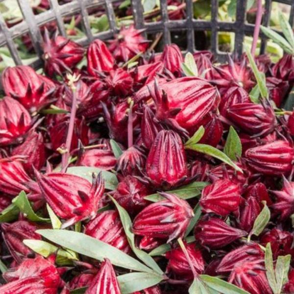 Groseille pays/fleurs d'hibiscus (bissap) Ital Bio livity 30g