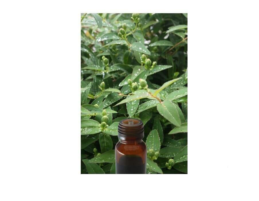 huile-essentielle-ravinstara-www.nabao.fr